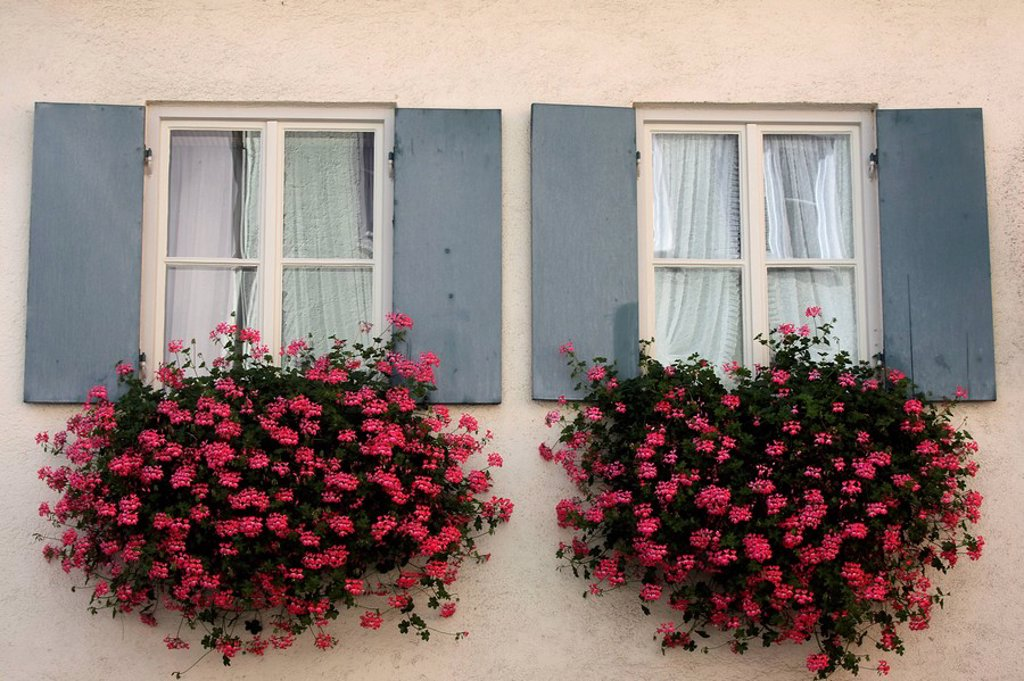 Windows with flower boxes : Stock Photo