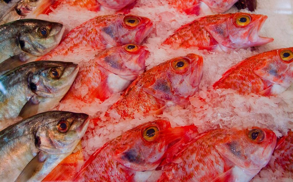 Fresh fish laid out on crushed ice : Stock Photo