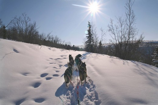Dog team from musher´s perspective, Black Hills, Yukon Territory, Canada : Stock Photo
