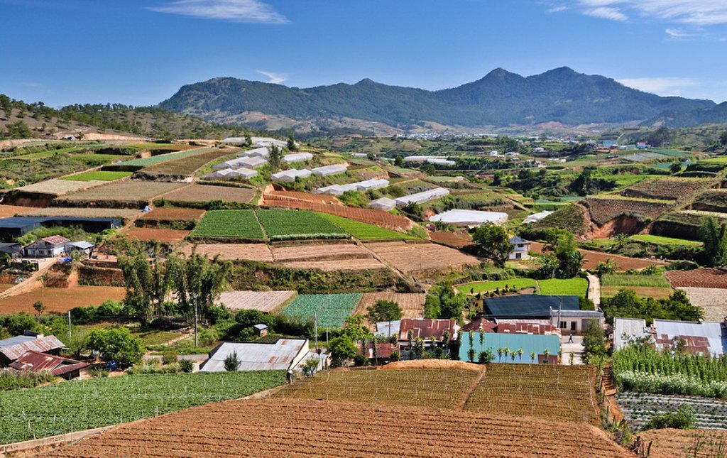 Terraced fields and greenhouses, agricultural area in Dalat, Vietnam, Asia : Stock Photo