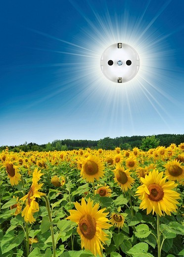 Stock Photo: 1848R-282210 Outlet in the sun over sunflowers