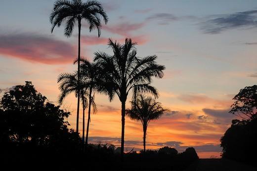 Stock Photo: 1848R-283640 Sunrise in the tropes Brazil
