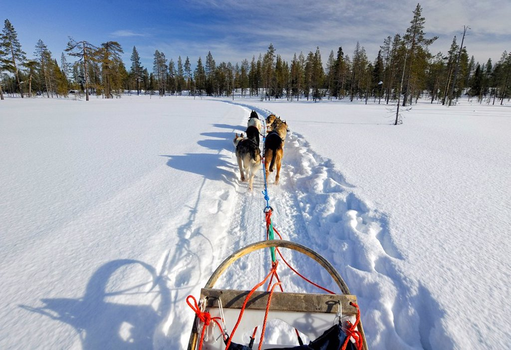 Stock Photo: 1848R-284847 Dog sled team travelling across wintry landscape, Finland, Scandinavia