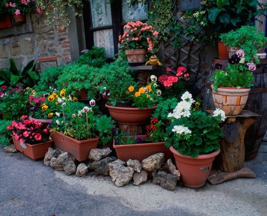 Stock Photo: 1848R-287256 Flower pots in front of house, Volpaia, Tuscany, Italy