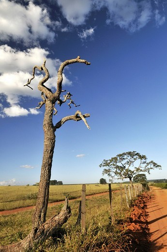 Landscape with a crippled dead tree, Brazil, South America : Stock Photo