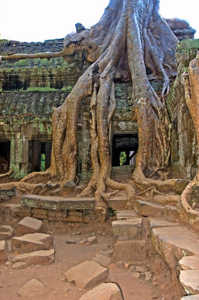 Stock Photo: 1848R-288943 Picturesque decayed Khmer temple in the jungle Ta Prohm, Angkor Wat, Siem Reap, Cambodia, Asia