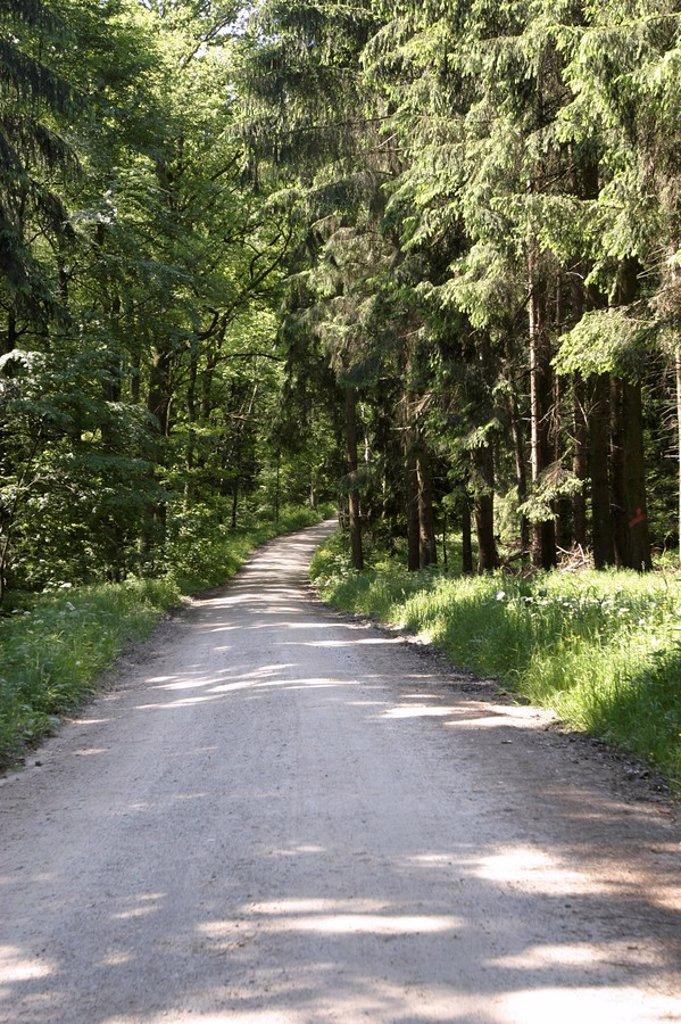 Markt Schwaben, DEU, 29 May 2005 - Way through a forest : Stock Photo