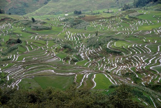Stock Photo: 1848R-293677 Rice paddies on the hillside, terraced rice fields, Yuanyang, in Xinji, Yunnan Province, People´s Republic of China, Asia