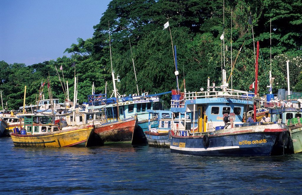 Old fishing boats in the harbor of Negombo, Sri Lanka : Stock Photo