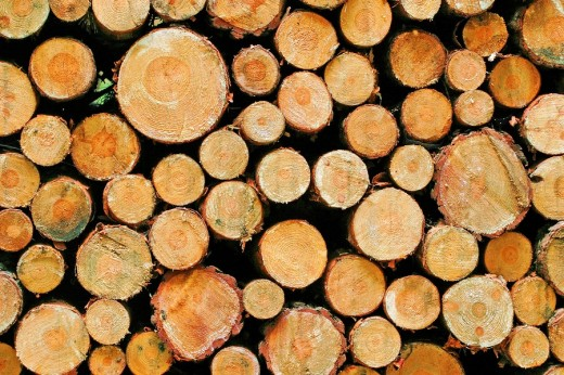 Stacked tree trunks : Stock Photo