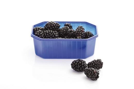 Blackberries in a plastic box : Stock Photo