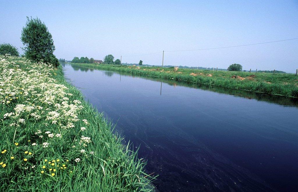 East Frisian landscape, Westgossefehn channel, Lower Saxony, Germany : Stock Photo