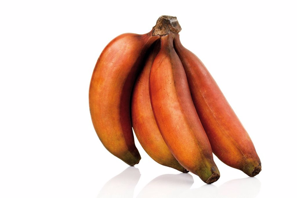 Stock Photo: 1848R-299572 Bunch of red bananas from Mexico