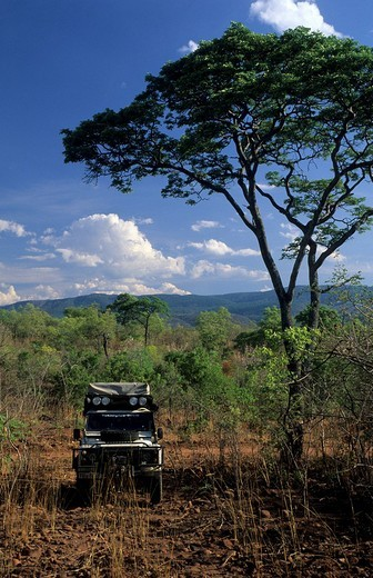 Vehicle with tourists driving through the african bush : Stock Photo