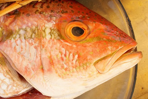Head of a reddish fish on a plate : Stock Photo