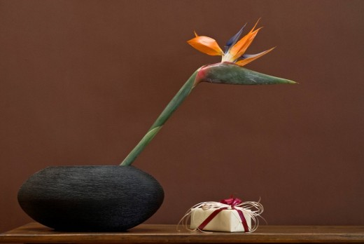 Stock Photo: 1848R-301571 Strelitzia or Crane Flower or Bird of Paradise Strelitzia reginae alongside small present wrapped with bow