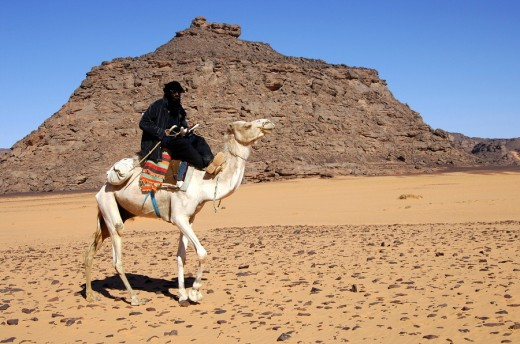 Tuareg with dromedary Acacus Mountains Libya : Stock Photo