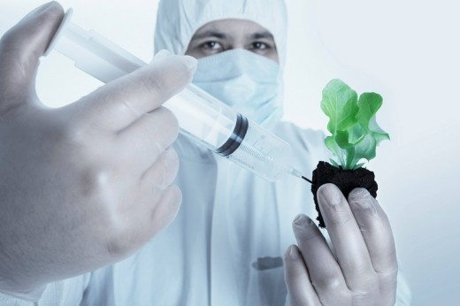 Chemist injecting a chemical substance into the topsoil of a plant : Stock Photo