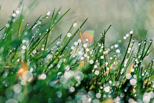Stock Photo: 1848R-302981 Grass with drops of water