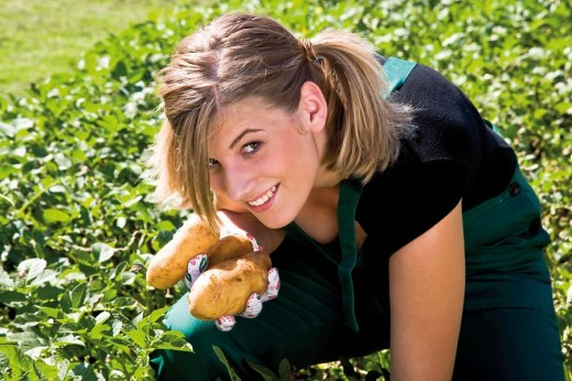 Young woman harvesting potatoes : Stock Photo