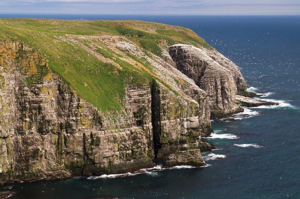 Bird rock at Cape St. Mary´s ecological seabird reserve, Avalon Peninsula : Stock Photo