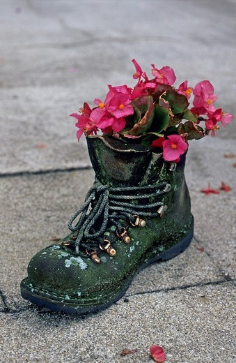 Stock Photo: 1848R-307979 Old climbing boots serving as a flowerpot Bavaria Germany