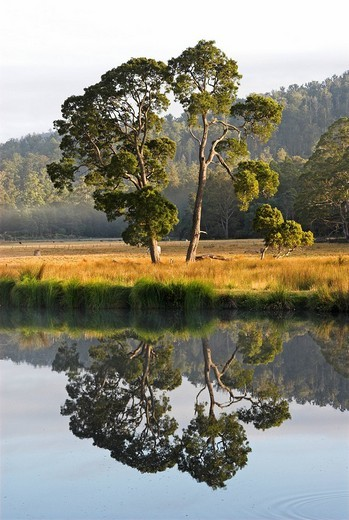 Lake near Launceston, Northern Tasmania, Australia : Stock Photo