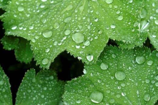 Waterdrop on leaf : Stock Photo