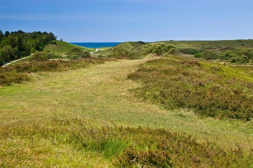 Stock Photo: 1848R-314447 The nature reserve Heatherhill near Raageleje, Denmark, Europe
