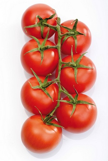 Vine tomatoes, truss : Stock Photo