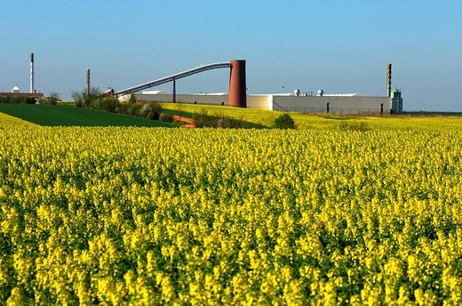 Field of rapeseed in front of an industrial facility, Germany : Stock Photo