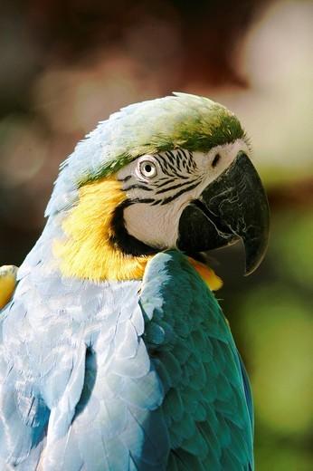 Portrait of a parrot : Stock Photo