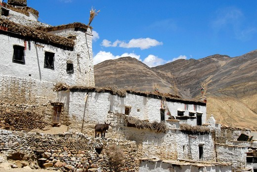 Traditional houses with donkey in village Shegar Tibet China : Stock Photo