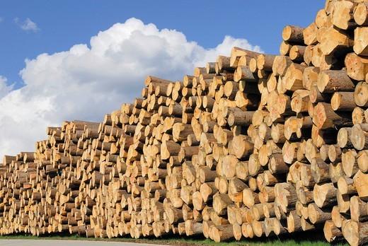 Wood storage near Viechtach, Bayerischer Wald, Bavarian Forest, Bavaria, Germany, Europe : Stock Photo