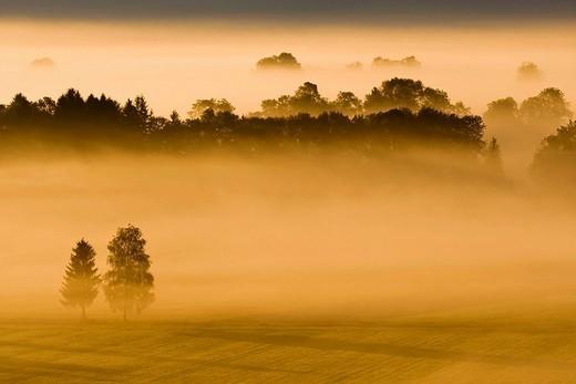 Landscape covered in fog, Bavarian pre-Alps, Upper Bavaria, Bavaria, Germany, Europe : Stock Photo