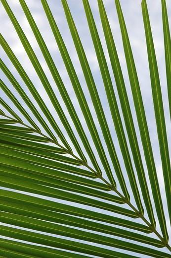 Stock Photo: 1848R-321123 Leaf of a palm tree