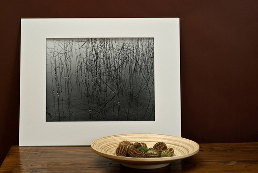 Cactus fruit in bamboo bowl in front of a black-and-white photograph by Klaus Wagenhaeuser : Stock Photo