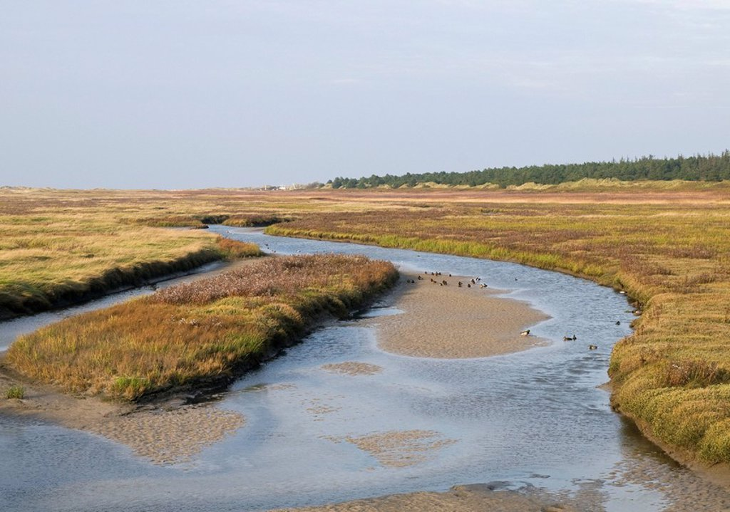 Tidal creek in the salt marshes in front of the St  Peter-Ording beach, Eiderstedt Peninsula, Schleswig-Holstein, Germany, Europe : Stock Photo