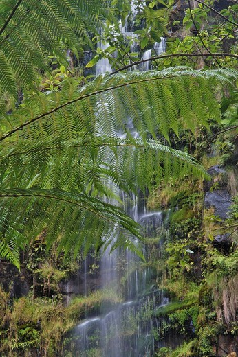 Stock Photo: 1848R-324360 Erskine Falls and fern trees Great Ocean Road Victoria Australia