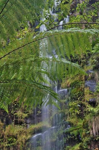 Erskine Falls and fern trees Great Ocean Road Victoria Australia : Stock Photo