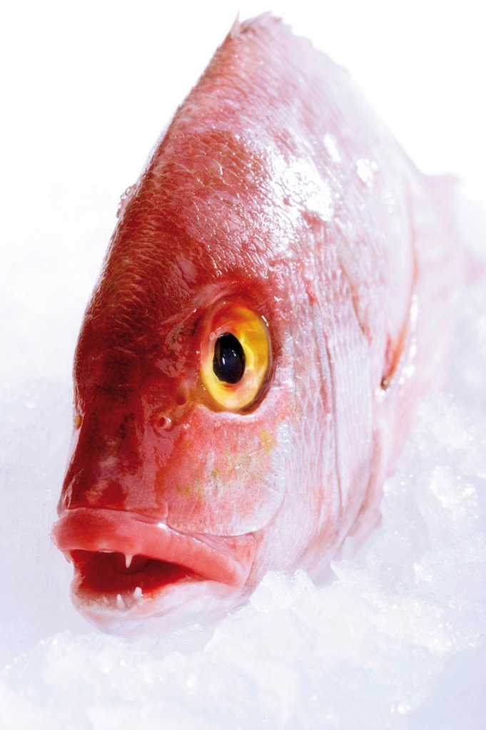 Gilt-head sea bream on crushed ice : Stock Photo