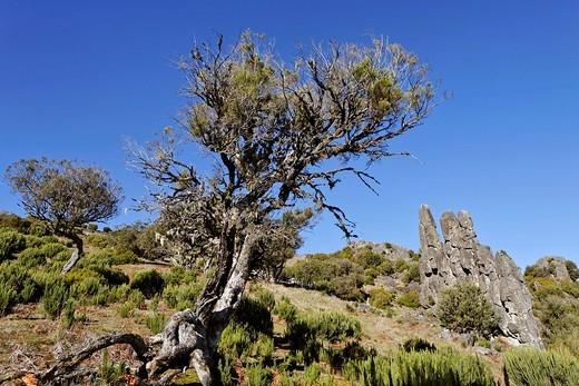 Stock Photo: 1848R-326093 Rock formation called Homem em Pe stony human on the Achada do Teixeira, Madeira, Portugal