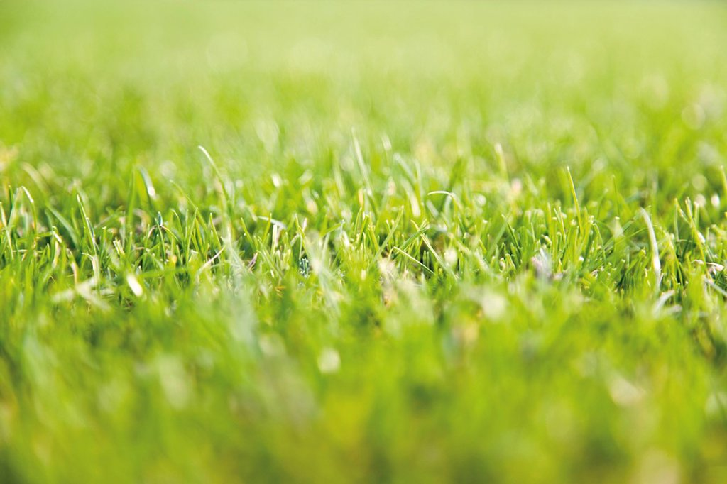 Football turf, closeup : Stock Photo