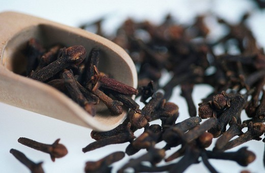 Stock Photo: 1848R-329916 Clove Spices Eugenia aromatica