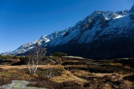 Raised moss landscape, Goeschener Valley, Canton of Uri, Switzerland, Europe : Stock Photo