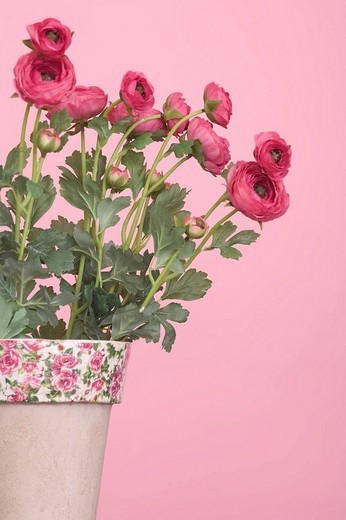 Stock Photo: 1848R-330623 Artificial flowers in a vase, pink backdrop