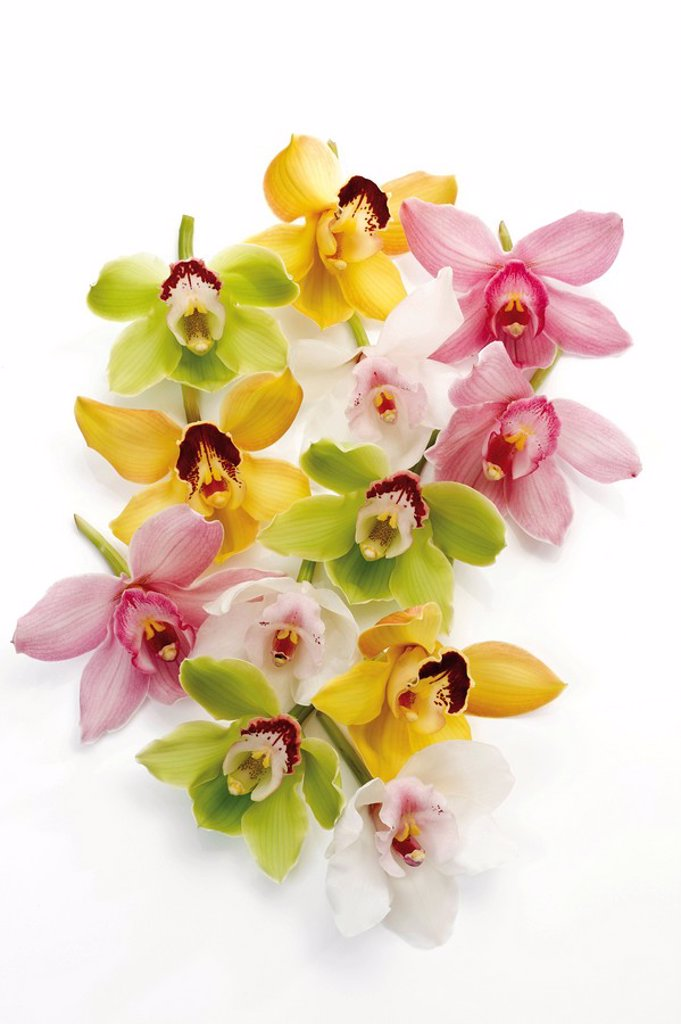 Bunch of orchid blossoms, various colours Orchidaceae : Stock Photo