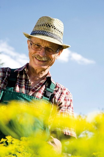 Beaming gardener in front of his patch of flowering dill : Stock Photo