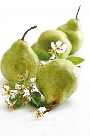 Green pears with blossoms : Stock Photo