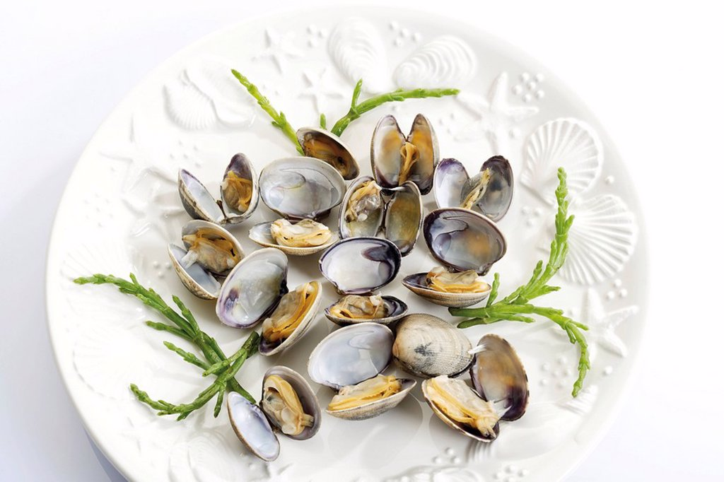 Venus Clams Veneridae, cooked, on a plate with seaweed : Stock Photo